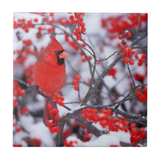 Varón cardinal septentrional, invierno, IL Azulejo