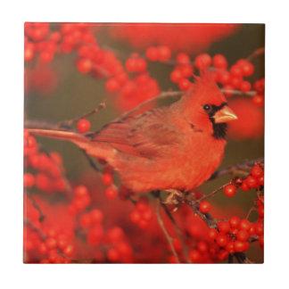 Varón cardinal septentrional rojo, IL Azulejo De Cerámica