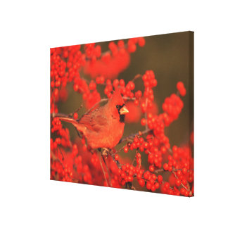 Varón cardinal septentrional rojo, IL Lienzo