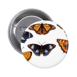 Vector de las mariposas pin