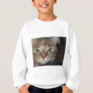 """Venga si usted atrevimiento"" dice el gato Sudadera"