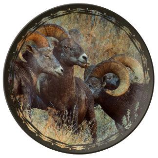 Ver el espolón del ojo plato de porcelana