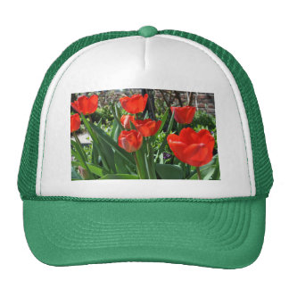 Verano del tulipán gorras