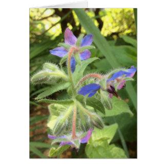 Verde rosado azul de la BORRAJA --- Tarjeta Pequeña