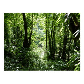 Verde tropical de la selva tropical II dominicano Postal