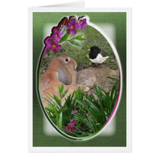 Versión 2 de la tarjeta 15 del conejito