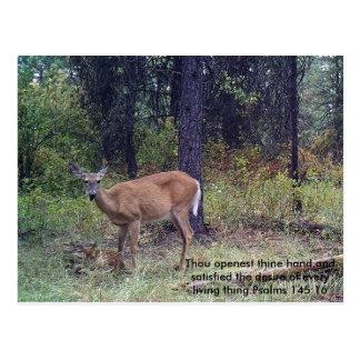 Verso de los ciervos y de la biblia postal
