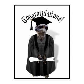 Vestido graduado de Meerkat W/Grey y marco negro Postal