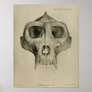 Veterinario de la impresión de la anatomía del