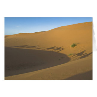 Viaje del camello tarjeta