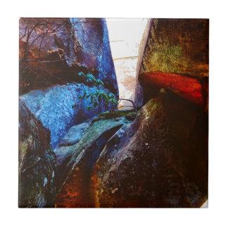 Vida de la roca azulejo
