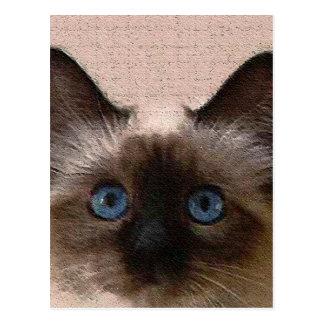 viejo del crujido del gato siamés envejecido postal