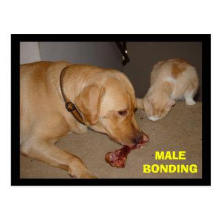 Vinculación masculina tarjeta postal