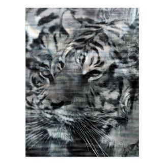 Vintage acodado blanco y negro de los tigres postal