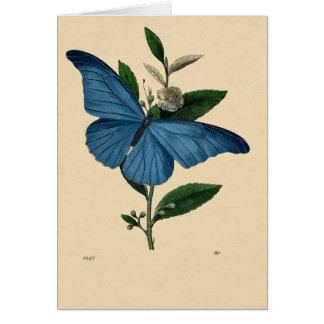 Vintage Blau Schmetterling, feliz cumpleaños Felicitaciones