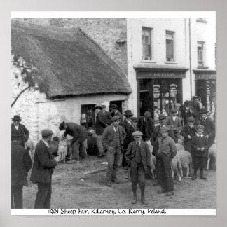 Vintage Co. Kerry ovejas de Irlanda, Killarney Póster