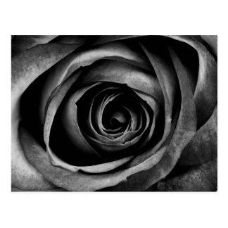 Vintage decorativo floral de la flor color de rosa postal