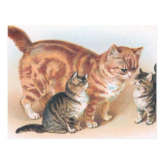 """Vintage del gato de Momma"" Postal"