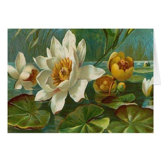 Vintage, flor acuática, cumpleaños de la esposa tarjetas