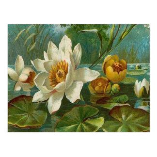 Vintage, flor acuática, cumpleaños de la esposa postales