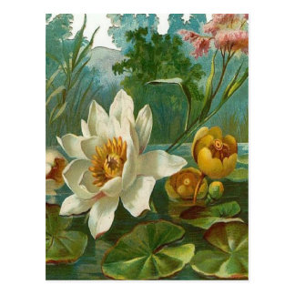 Vintage, flor acuática, cumpleaños de la esposa postal