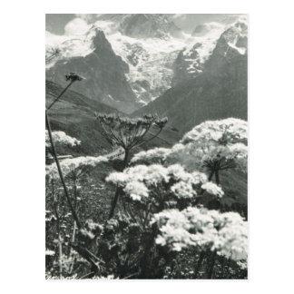 """Vintage Francia, Chamonix """"Mont Blanc """" Postal"""