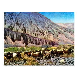 Vintage, la Argentina, erosión de la roca, manada Postal