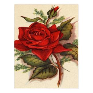 Vintage, rosa rojo, cumpleaños de la esposa postal