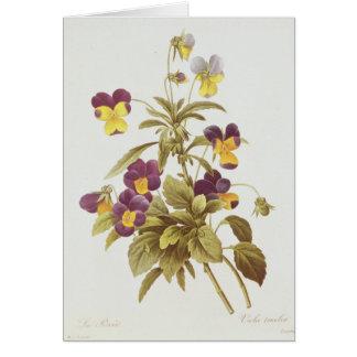 Viola tricolora tarjeta
