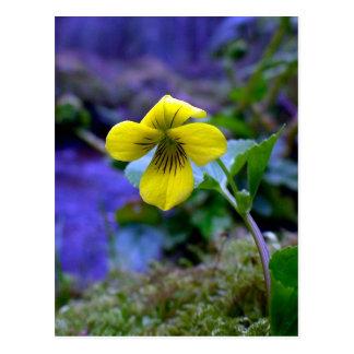 Violeta amarilla que se arrastra 01 postal