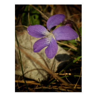 Violeta salvaje por el mac de Shawna Postal