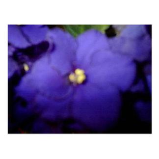 Violeta Postales