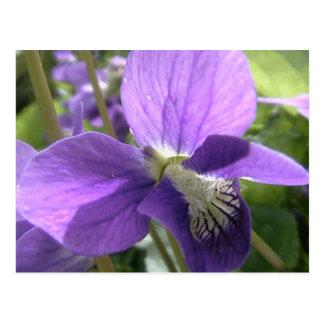 violeta tarjetas postales