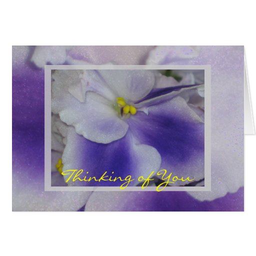 Violetas africanas tarjeta