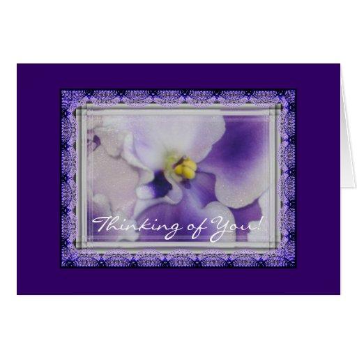 Violetas africanas tarjeton