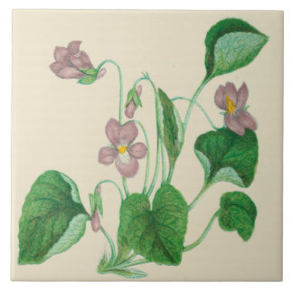 Violetas de la baldosa cerámica de la cocina del