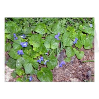 violetas salvajes tarjeta de felicitación
