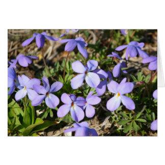 violetas tarjeta pequeña