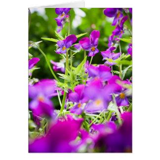 violetas tarjeta de felicitación