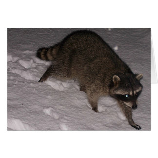 Visitante del mapache en la tarjeta de la nieve