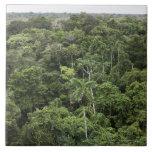 Vista aérea de la selva tropical del Amazonas Tejas