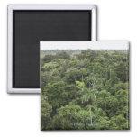 Vista aérea de la selva tropical del Amazonas Imán Cuadrado