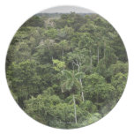 Vista aérea de la selva tropical del Amazonas Plato De Comida