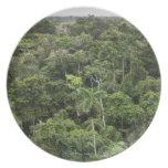 Vista aérea de la selva tropical del Amazonas Plato Para Fiesta