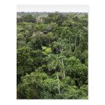 Vista aérea de la selva tropical del Amazonas Postal