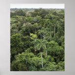 Vista aérea de la selva tropical del Amazonas Póster