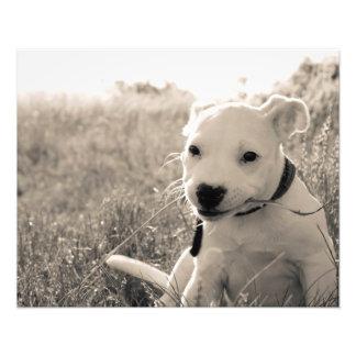 Vista de un perro de perrito en verano fotos