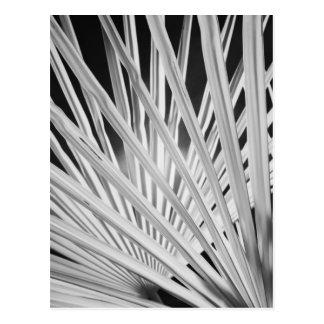 Vista negra y blanca de las frondas de la palmera postal