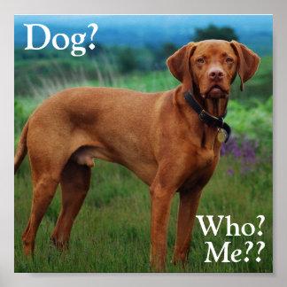 ¿Vizsla - perro? ¿, Quién? ¿, Yo?? Poster