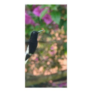 Vuelo blanco y negro del colibrí en un alimentador tarjetas fotográficas personalizadas
